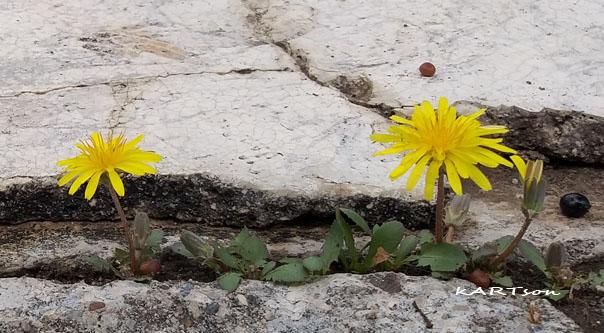 Η ομορφιά υπάρχει παντού…αρκεί να την προσέξεις.(Φωτογραφίες)