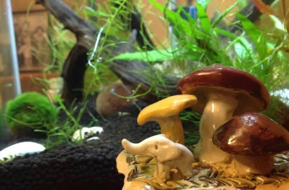 Mushroom and Elephants pottery