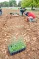 Plantando la valla vegetal Ekotania 3