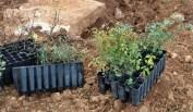 Plantas autóctonas donadas por el INIA
