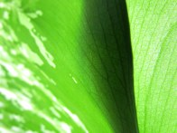 Overlapping Green - Photography