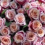 Rozex eller Rosazol mot Rosacea? Receptfri behandling vid ansiktsros