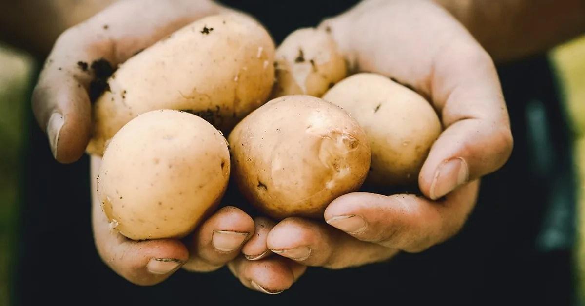SHORT STORY   The Untold Story Of The Potato Peeler
