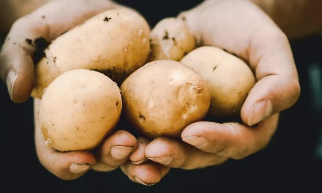 SHORT STORY | The Untold Story Of The Potato Peeler