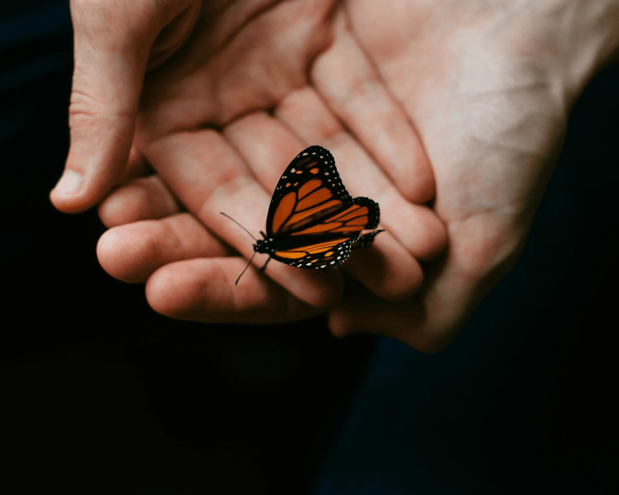 POETRY | The Butterfly by Maria Fernandez
