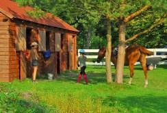 zdjęcie przedstawia stadninę koni przy dworze do sprzedaży w okolicy Wrocławia