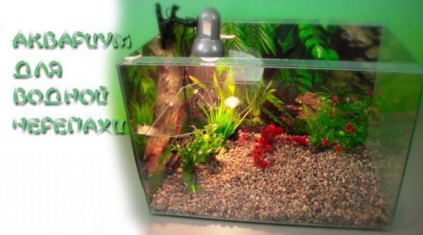 Выбираем и обустраиваем аквариум для водной черепахи