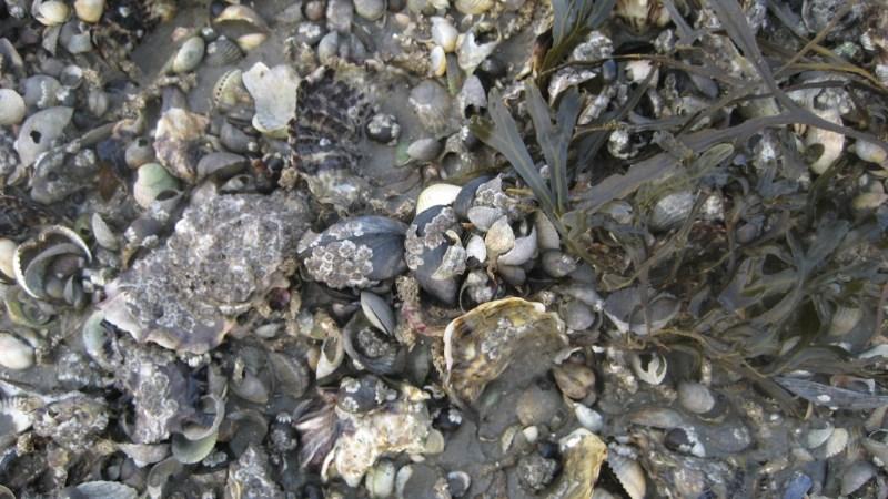 Las ostras – Martín Cristal
