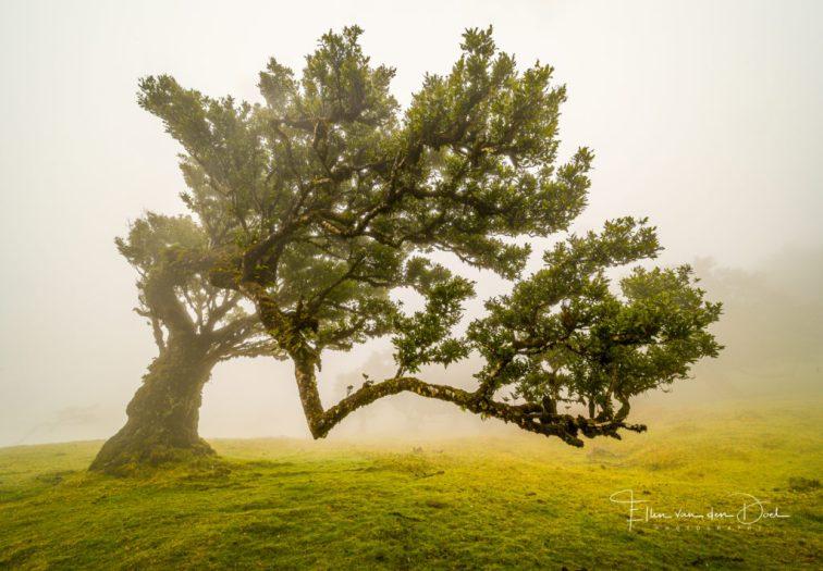 Oude bomen met bijzondere vormen.
