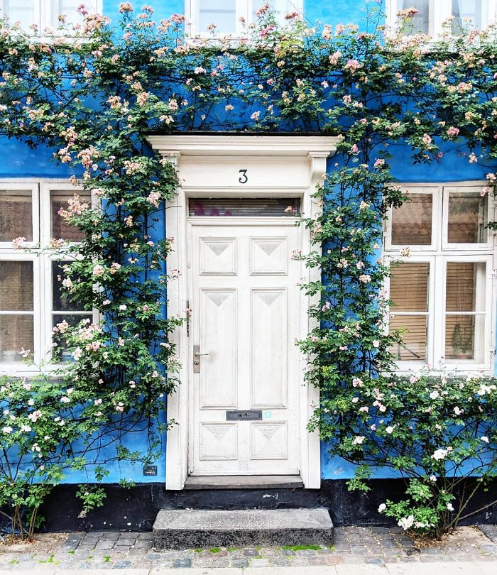colorful-front-doors-photography-london-bella-foxwell-52-5c36fa45f3fa1__700