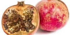 مرض عفن القلب الأسود في الرمان