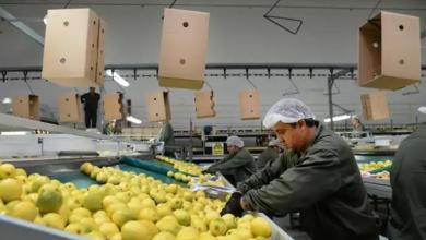 Photo of Tucumán podrá ingresar al mercado de China