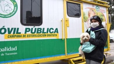 Photo of Hasta el 3 de julio ofrecen el servicio gratuito de castración de mascotas en el barrio Mitre