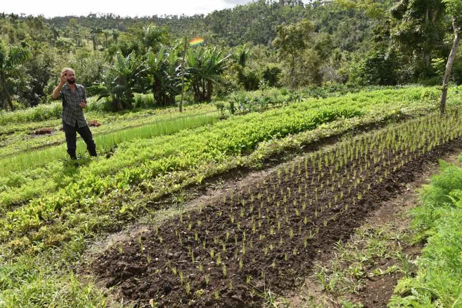 Foto Agricultura 4