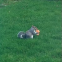 unusual diet for a squirrel?