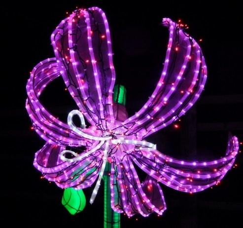 Longleat flower 1