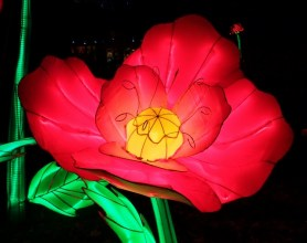 Longleat flowers 5