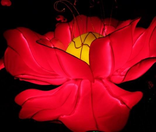 Longleat flowers 7