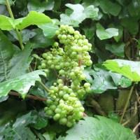 July: the edible garden