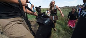 Photo courtesy of http://yournewswire.com/peaceful-native-american-protesters-attacked-by-dogs-pepper-sprayed/