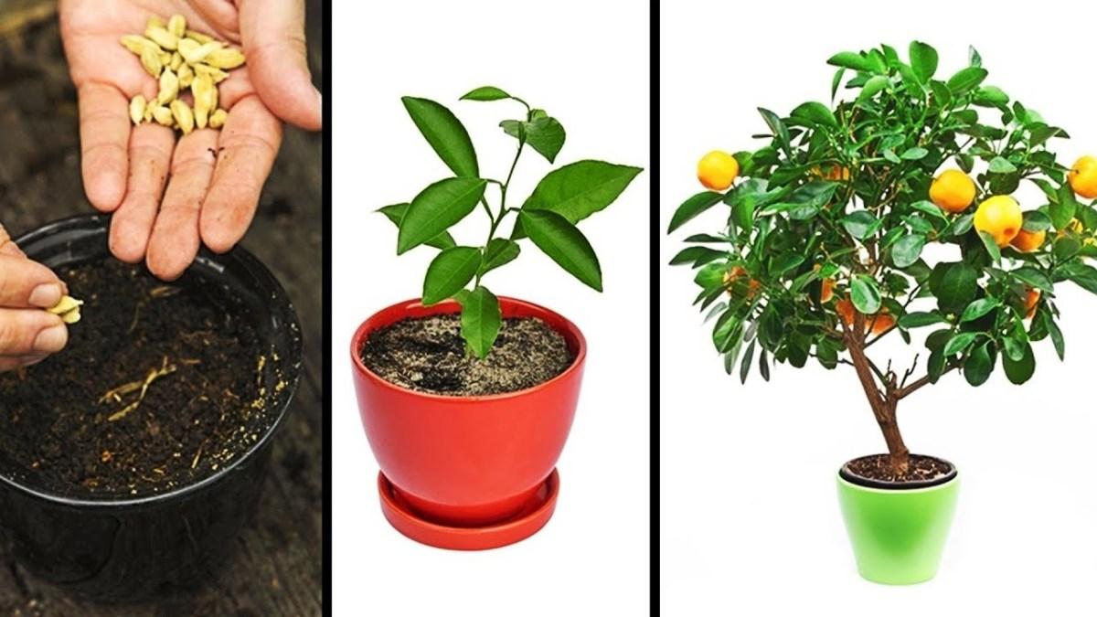Alcaloizii de pirolizidină din ceaiurile de plante ne pot îmbolnăvi 1