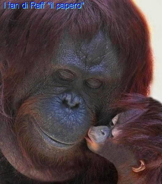Inteligența și frumusețea animalelor-Galerie FOTO 29