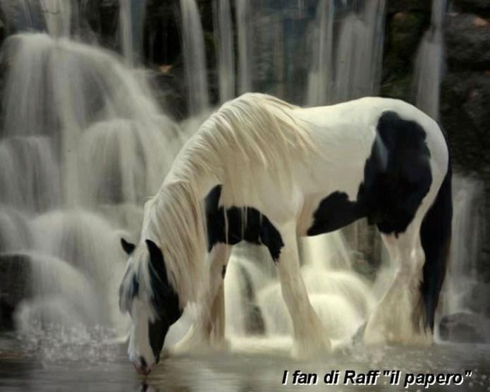 Inteligența și frumusețea animalelor-Galerie FOTO 32