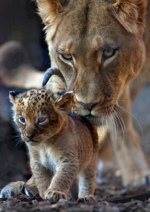 Inteligența și frumusețea animalelor-Galerie FOTO 5