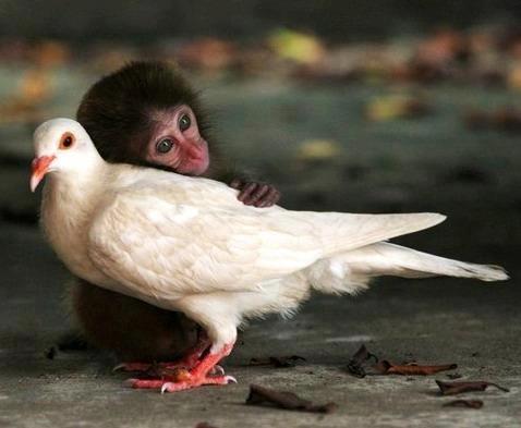 Inteligența și frumusețea animalelor-Galerie FOTO 16