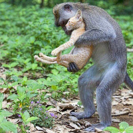 Inteligența și frumusețea animalelor-Galerie FOTO 20