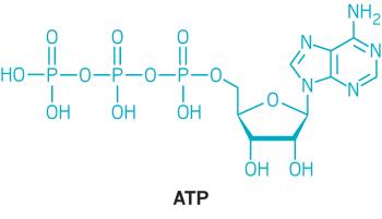 adenozin trifosfat