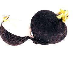 Imagini pentru ridiche neagră