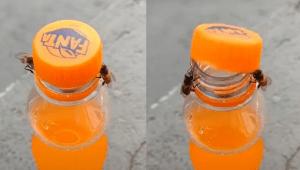 Moment viral:Două albine deschid o sticlă de suc (VIDEO)