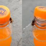 2 albine deschid o sticlă de suc