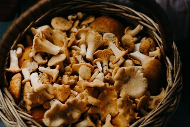 Ergotioneina din ciuperci reduce riscul de cancer cu 45% 1