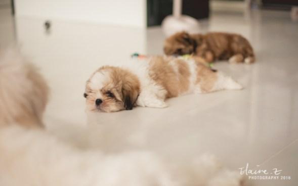 puppies-45