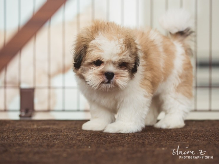 puppies-9