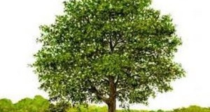 الاشجار
