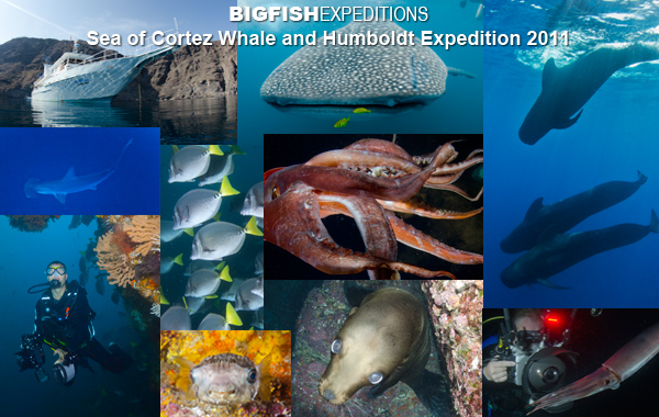 sea of cortez diving