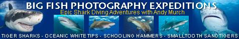 shark diving trip