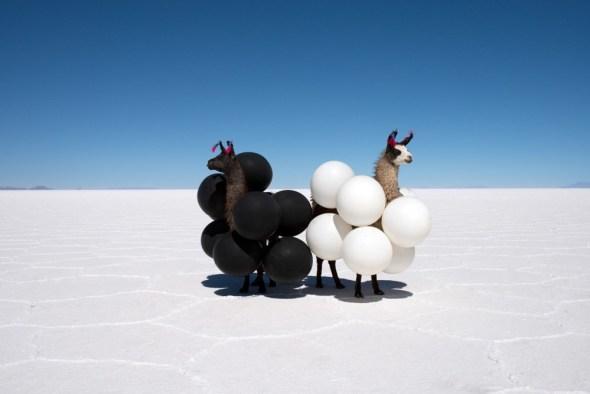 Llamas en Bolivia. Foto: Gray Malin.