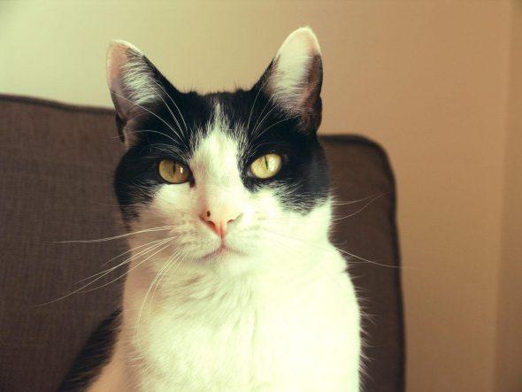 Cooper el gato.