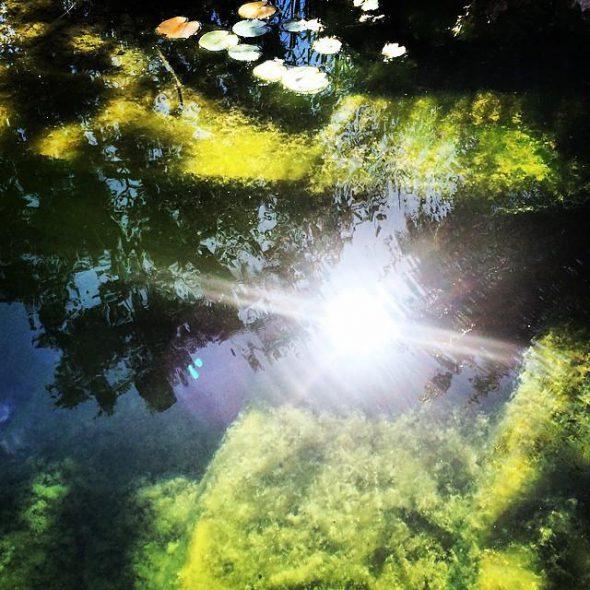 El estanque de David. Foto: Mari Ackerman.
