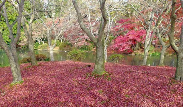 Fotografía tomada en Japón dentro del libro