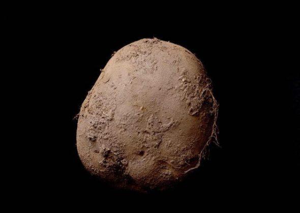 patata millon