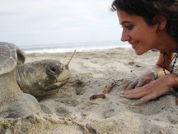 Tortugas en la playa de