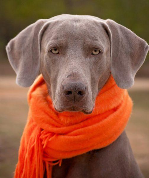 De Invierno Trucos Gatos Calentitos Cuidar Perros Para Seis Este Y odCrBxWe