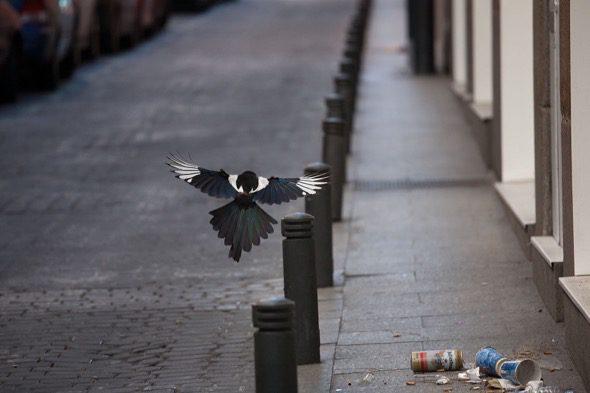 Una de las fotografías del proyecto 'Safari' de Elena Almagro.