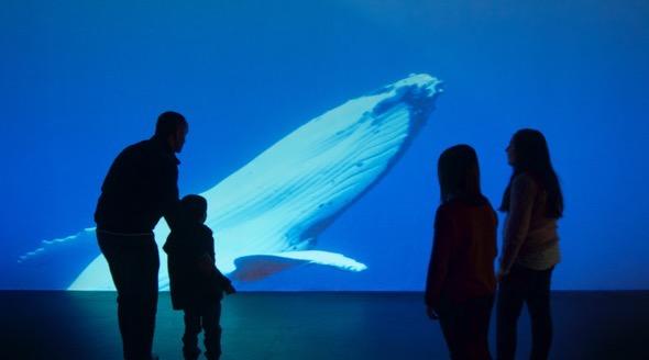 Una proyección de ballenas en la exposición de los Océanos en Madrid.