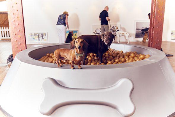 1000 pelotas simulan comida perruna en un bol gigante. Arte para perros. Foto: Mikael Buck / More Than